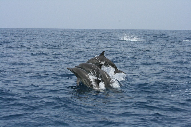 dolphin post