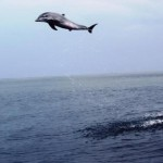 post dolphin