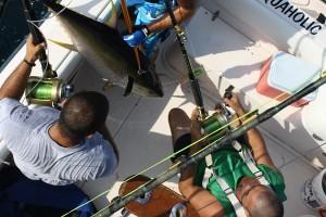 more tuna